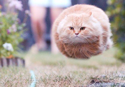 Rocket Cat (chat fusée)